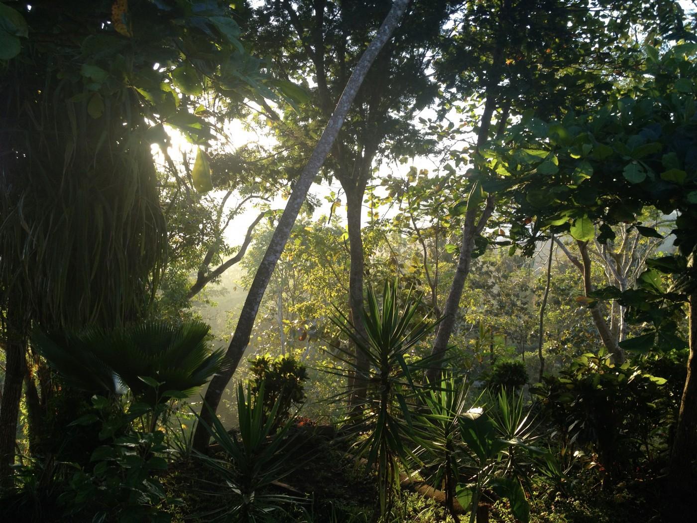 Tambour,Costa Rica,jungle